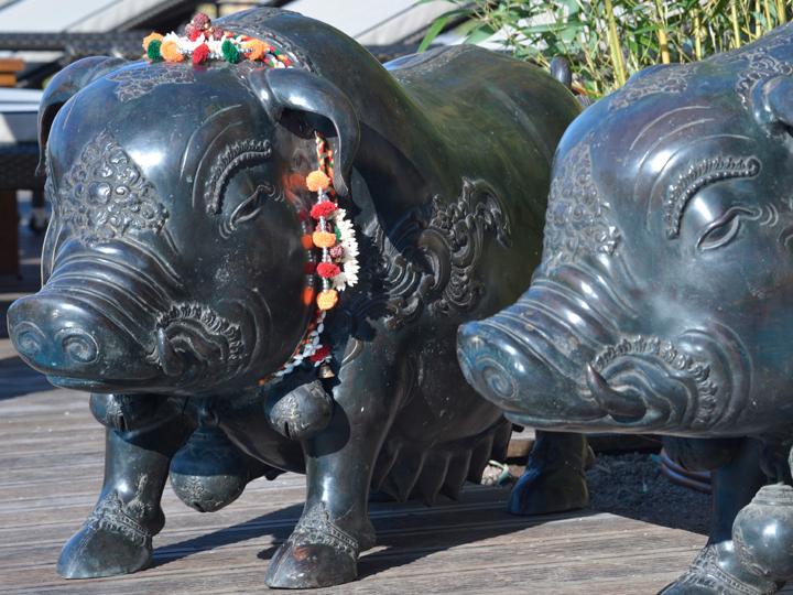 Bronze Schweine am Außenpool des Vabali Spa